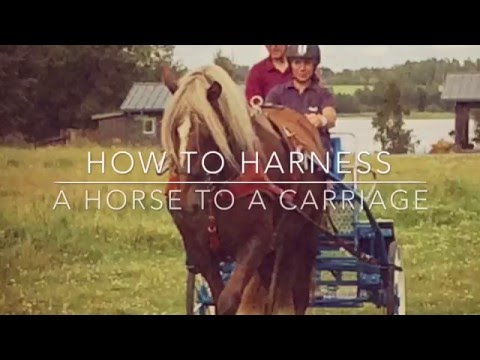 How to harness a horse to a carriage