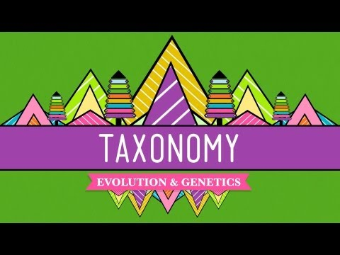Taxonomy: Life's Filing System - Crash Course Biology #19