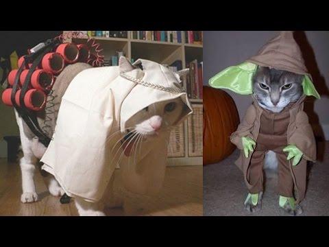 Worst Cat Costumes Ever!