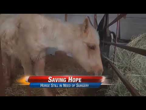 A Follow Up Story on Hope the Horse
