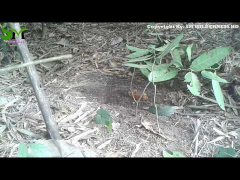 WOW!Amazing Quick Squirrel Trap Using Iron Box Trap ( REAL CATCH ON CAMERA) - How To Catch Squirrel