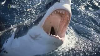 Worlds Deadliest Sharks