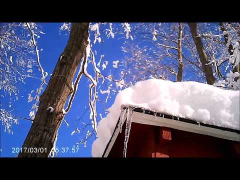 SNOW Covered Trees Photos & SQ-8 Video