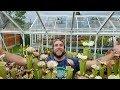 #17 Open Day bei Mike King in England   Fleischfressende Pflanzen   Karnivoren   Green Jaws