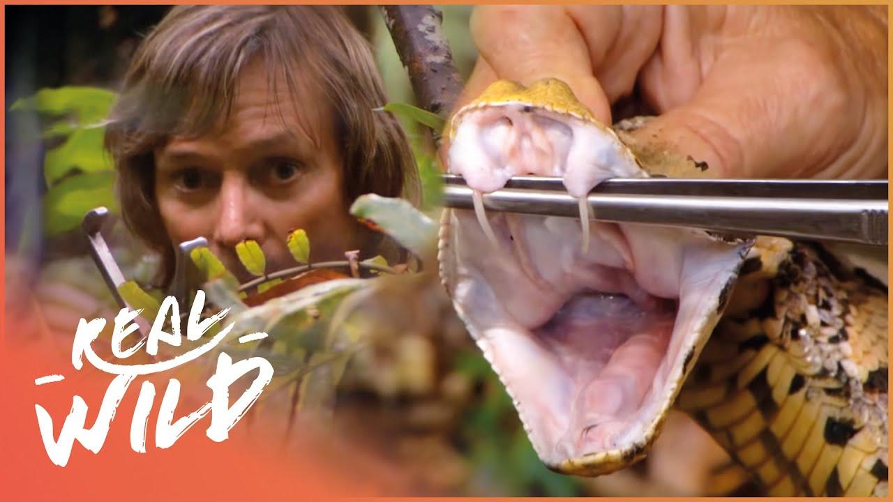 Austin Stevens Wrestles A Monster Python | Austin Stevens Adventures  | Real Wild