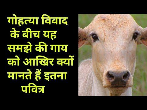 आखिर गाय को क्यों मानते हैं पवित्र