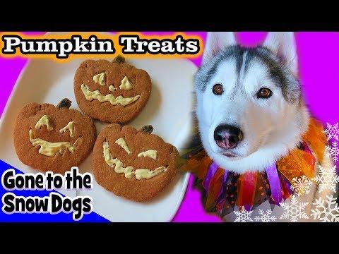 DIY Halloween Dog Treats Jack-o-Lantern   DIY Dog Treats   Snow Dogs Snacks 85