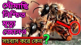 নিশ্চিত মৃত্যু জেনেও মৌমাছিরা কেন মিলন করে। Amazing Honey Bee Intercourse  মৌমাছির প্রজনন।