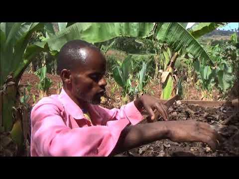 Sokoru Vermi Compost Preparation