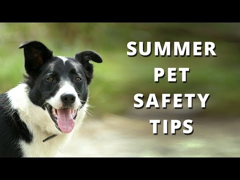 Summer Safety Pet Tips - Keep Your Pets Safe in the Heat This Summer with this Advice
