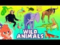 Learn Wild Animals For Kids Wild Zoo Animals Names And Sounds For Children Club Baboo