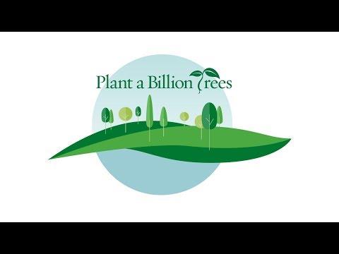 Help Us Plant a Billion Trees!