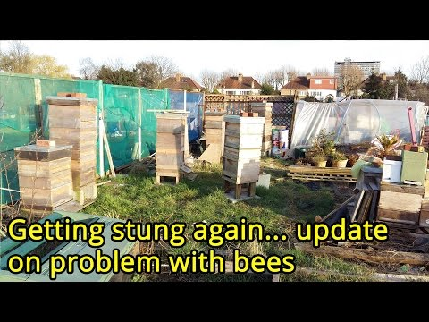 Getting stung again... update on problem with bees.