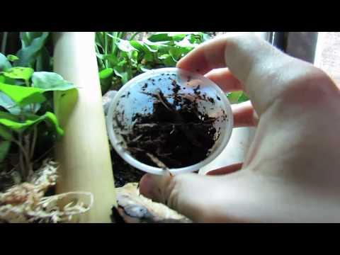 Seeding Dumpy Vivarium