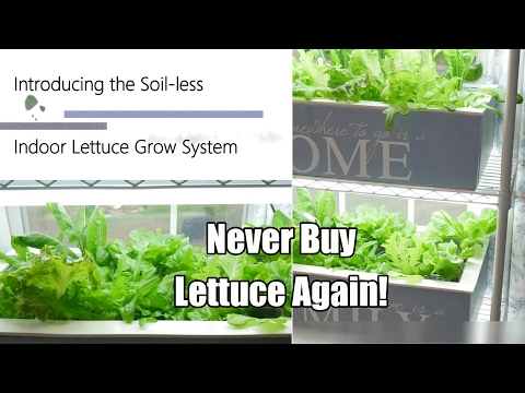 Never Buy Lettuce Again - The Indoor Soil-less Lettuce Grow System, DIY Clean & Easy! 4K