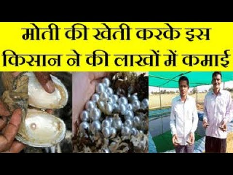 Pearl cultivation idea changed the life of an engineer (Moti ki Kheti)  Low Investment, High Profit.