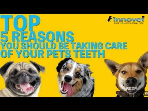 TOP 5 Reasons To Take Care Of Your Pets Teeth