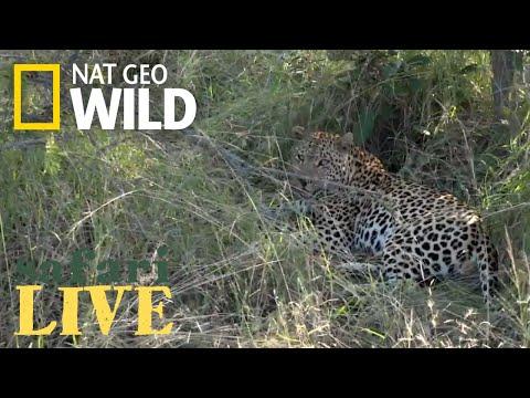 Safari Live - Day 160 | Nat Geo Wild