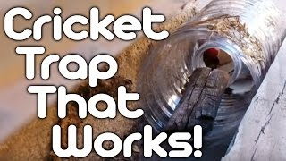 Cricket Trap That Works