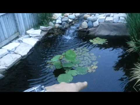 June 9th pond update on gowth