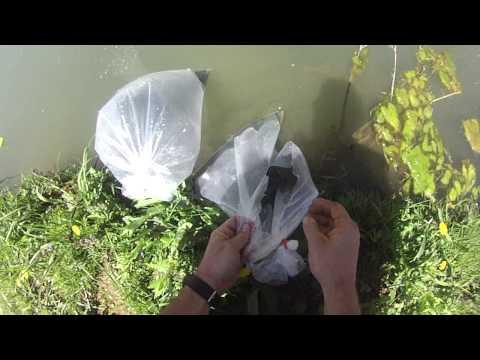 Stocking fish in my pond: Hybrid Bluegill, Black Crappie, and Hybrid catfish