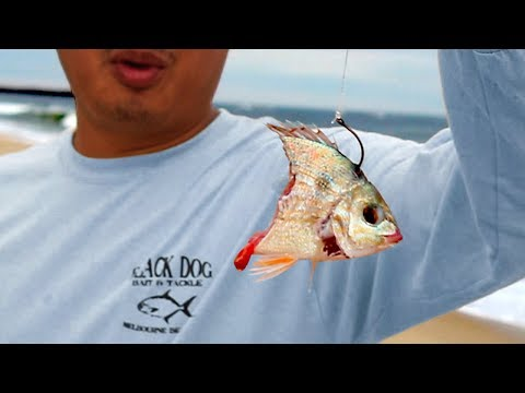 Catch Big fish from ANY beach: Live Line Beach Fishing Tutorial