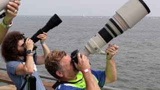 """Sigma 150-600 Contemporary """"Real World Review"""": The BEST Wildlife / Sports lens for under $1,000?"""