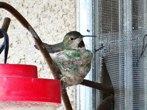 Q&A Sugar Nectar Okay For 100's of HUMMINGBIRDS in the Garden
