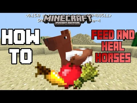 HOW TO FEED AND HEAL HORSES IN MCPE 0.15.0|Minecraft PE (MCPE) How To #28
