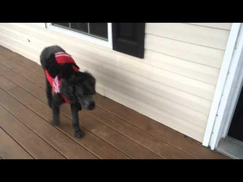 Dog after seizure Brain tumor diagnosis