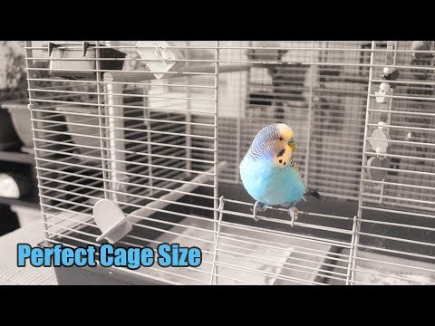 What Is the Perfect Cage Size for Two Budgies?