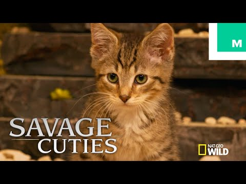 Kittens Recreate 'Savage Kingdom: Uprising' Premiere (with Game of Thrones' Charles Dance)