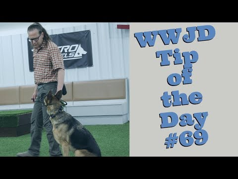 What Would Jeff Do? Dog Training Tip of the Day #69