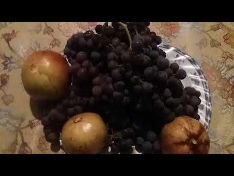 Greece visit   fruits farm