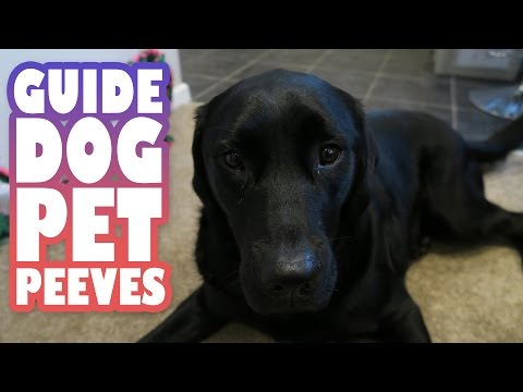 Blind People Problems: Top 5 Guide Dog User Pet Peeves | Lucy Edwards and Molly Burke