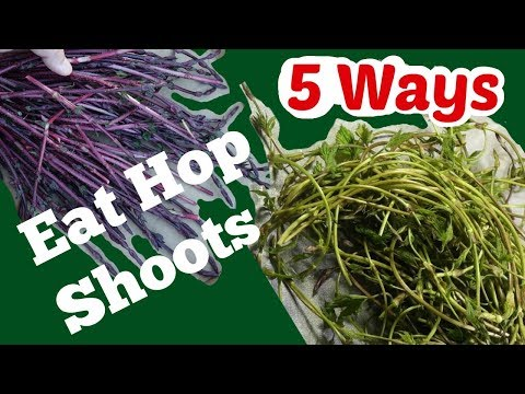5 Ways to Eat Hop Shoots: How to Pick and Eat Hops in Spring