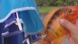 Umbrella Fish with PEN ROD Penfishingrods.com