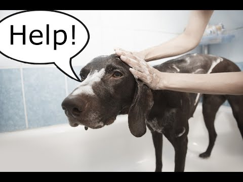 The Easy Way to Give a Dog a Bath Indoors