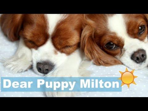 Dear Puppy Milton: Los Angeles California | Dog Travels