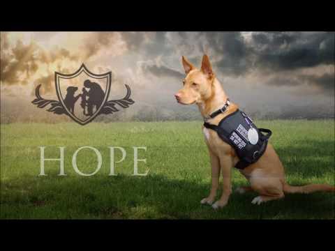 PTSD Service Dog Training Program for Veterans