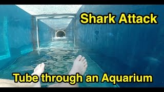 Shark Attack : Tube through an Aquarium : Atlantis The Palm in Dubai