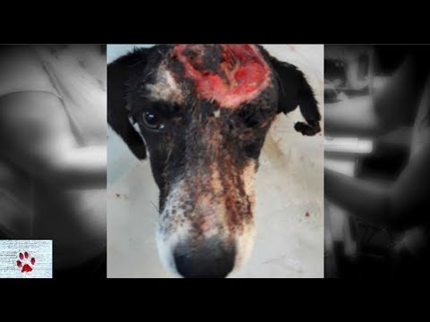 Stray dog hit by car makes a full recovery