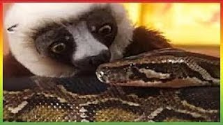 ▶ Zoboomafoo Episode 201 - Snakebellies - Animal shows for kids - Zoboomafoo Show