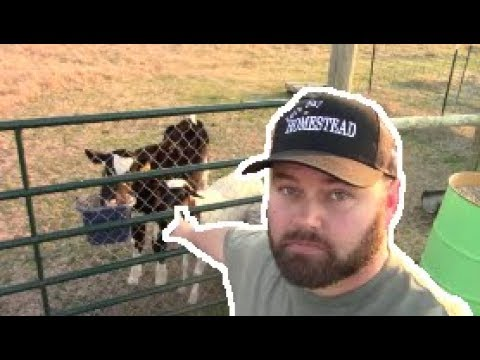 Jesse Gets MAD At The Sheep!?! Lets Look Inside The BEE HIVES!?!