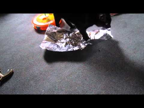 peewee with aluminum foil 001