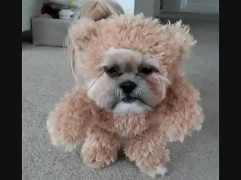 Living Teddy Bear, Cutest Dog Costume How to Make