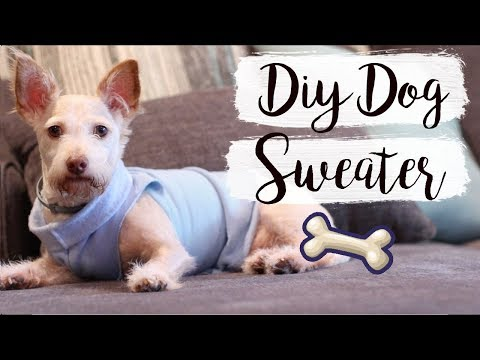 Easy DIY Dog Sweater (No Sew) | Pet DIYs