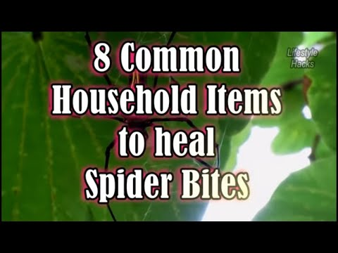 8 Common Household Items to treat Spider Bites