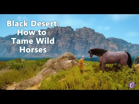 Black Desert Online (BDO) - How to Tame a Horse