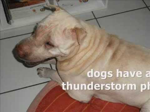 DOGS AND STORMS Freak Out Time